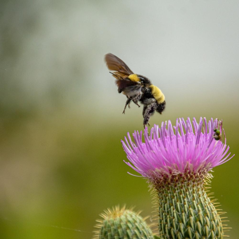 bee pearching on purple flower