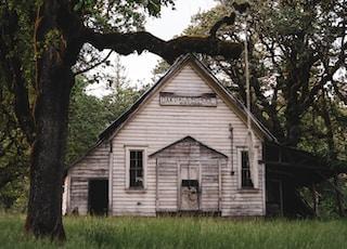 white house near trees