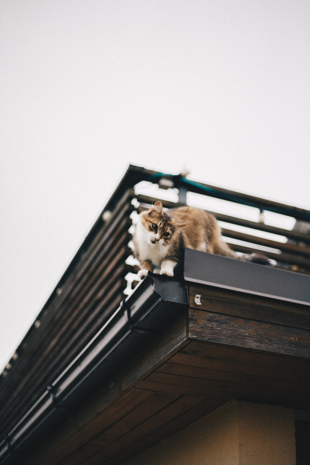 cat on top of building