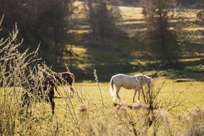 white horse photography ranch zoom background
