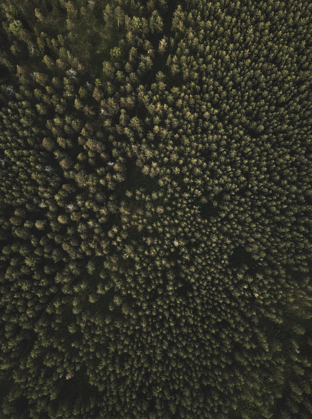 aerial photography of tall green trees