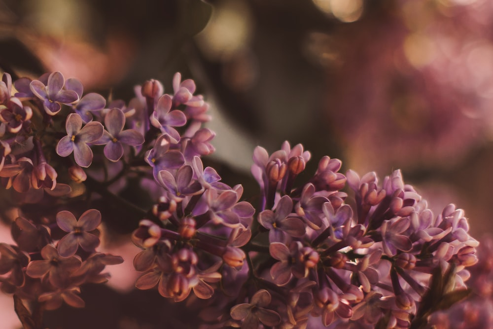 purple cluster flowers in selective-focus photography