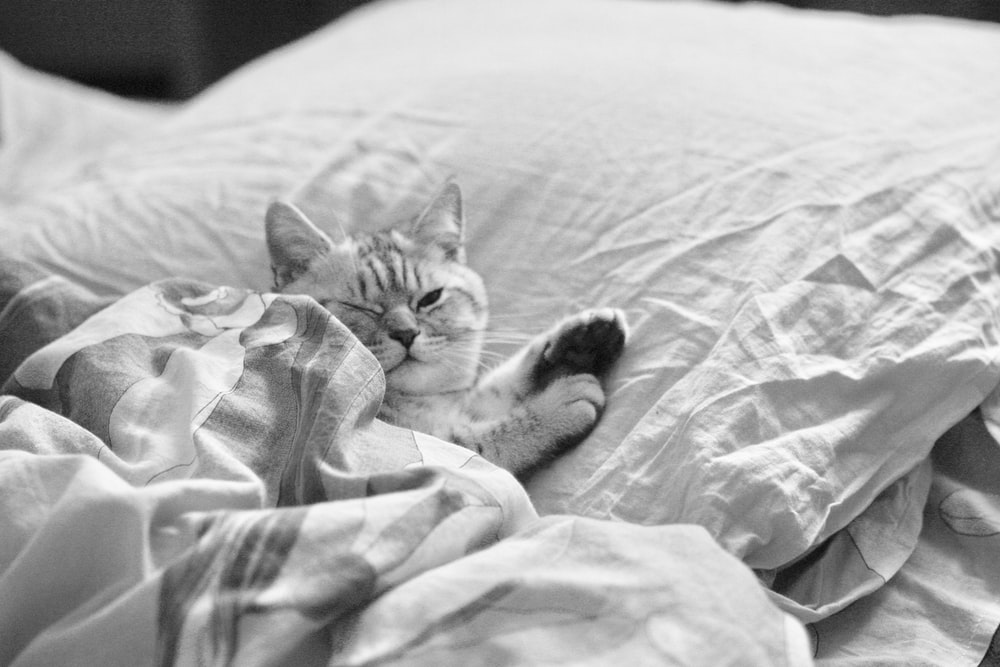 grayscale photography of cat lying o n bed