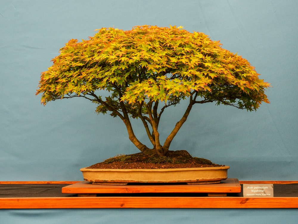 yellow leafed tree painting