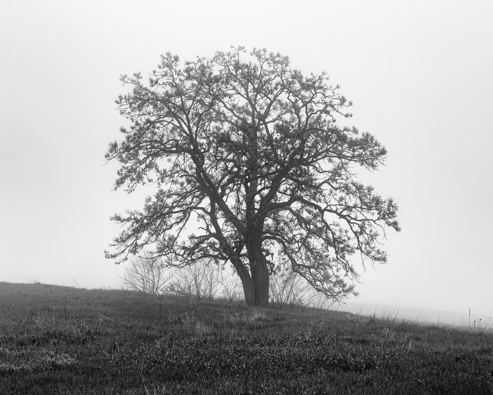 bare tree on top of hill during daytime