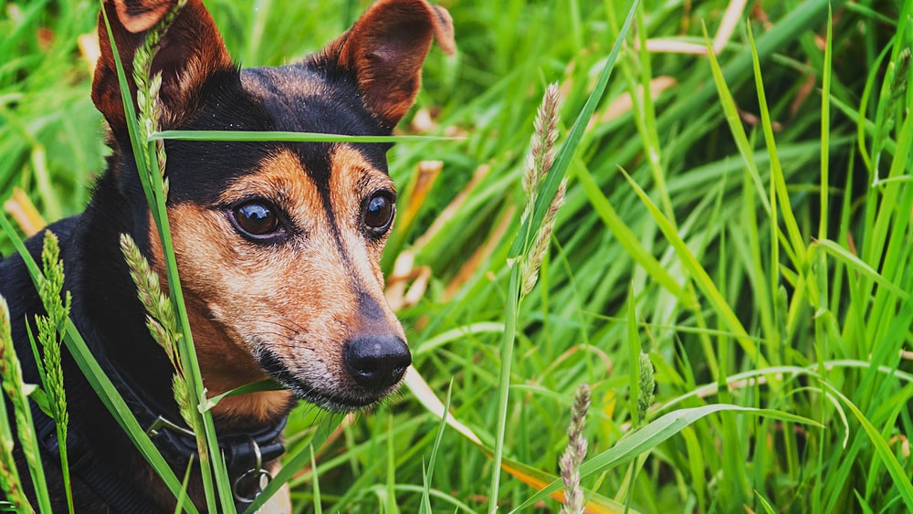 black and brown dog on grass