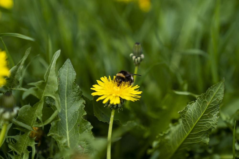bee perching on flower