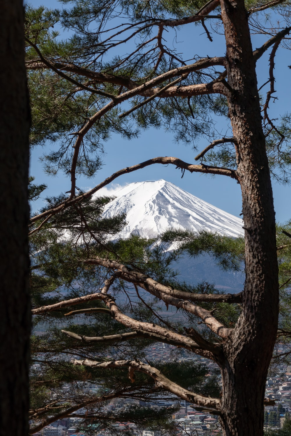 mount Fuji with tree at daytime