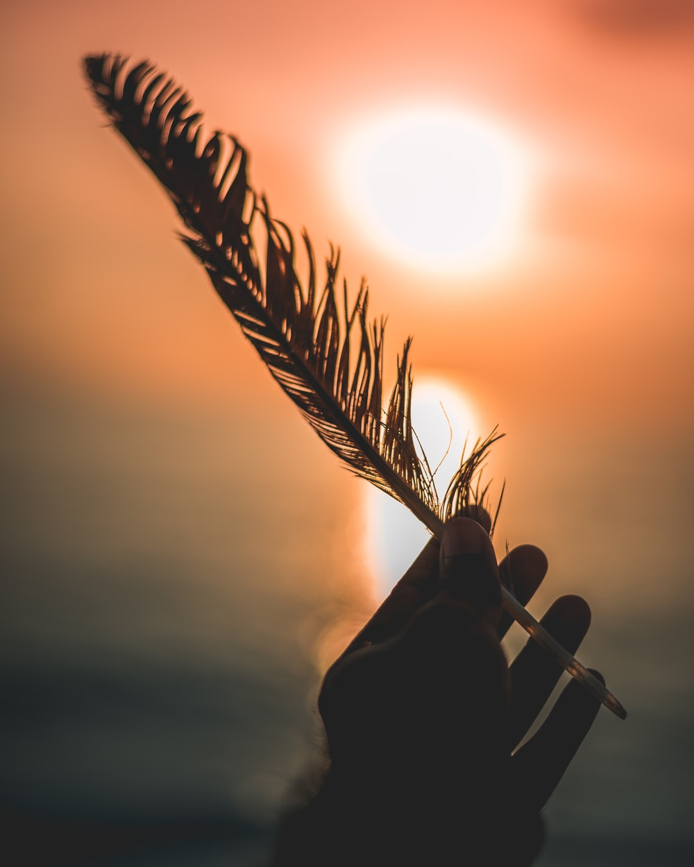 silhouette of person's hand holding bird feather