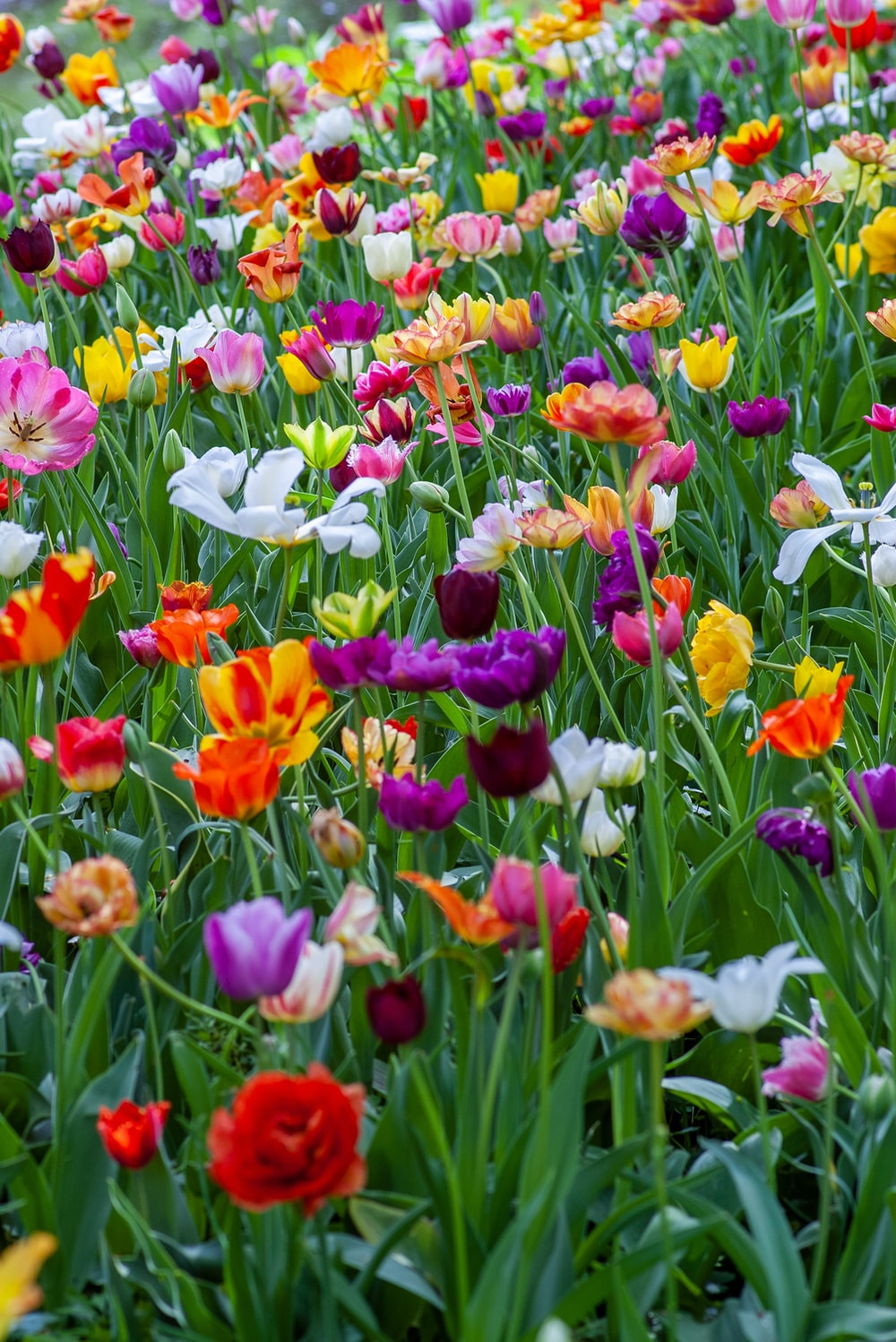 500 Spring Flowers Pictures  Download Free Images on Unsplash