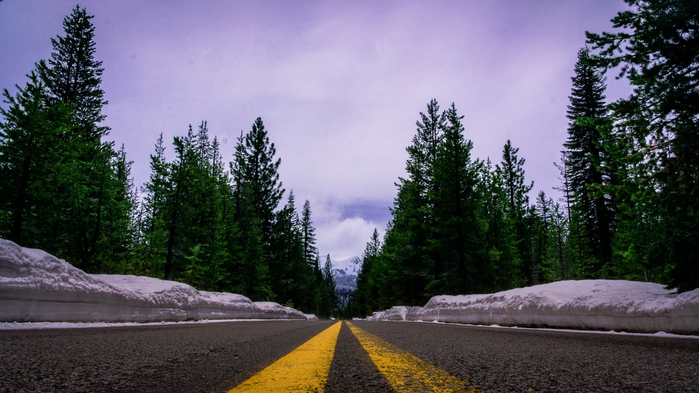 gray and yellow pavement road towards trees
