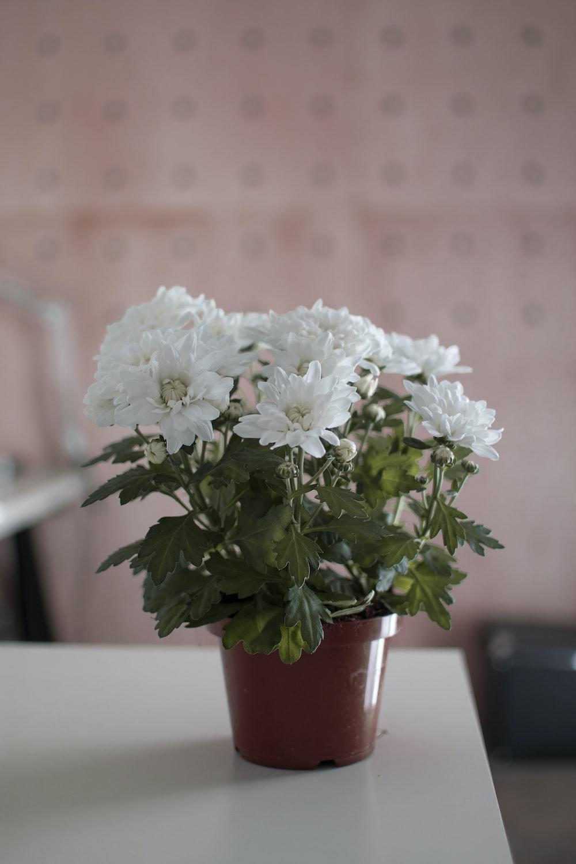 white petaled flowers on table