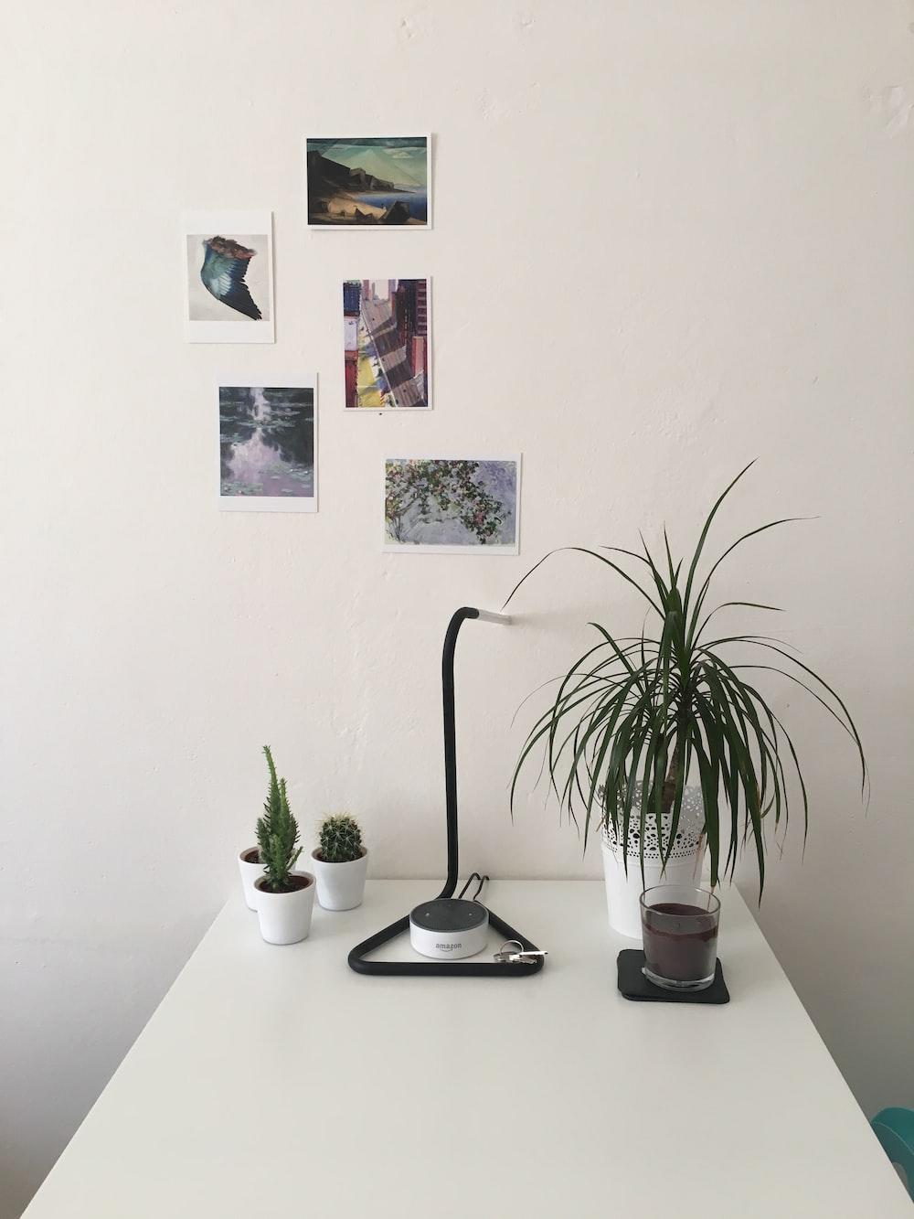 green leaf plant near wall