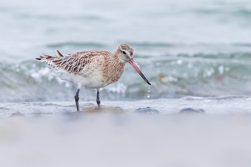 brown bird on shore during daytime