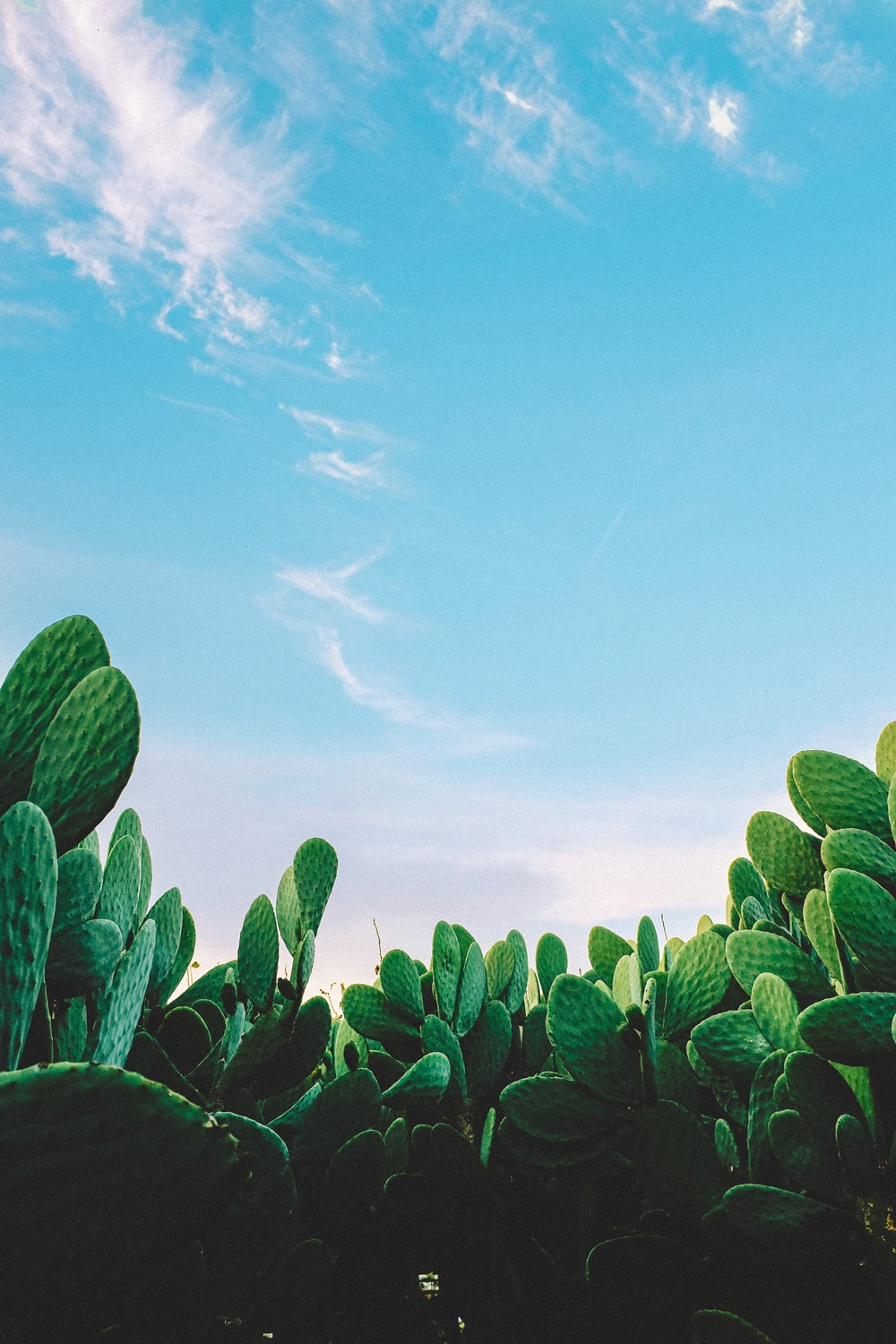 Cactus Wallpapers Free Hd Download 500 Hq Unsplash
