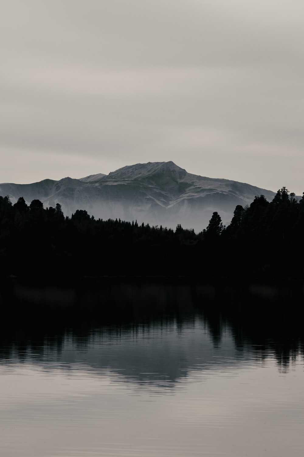 silhouette of mountain and pine trees