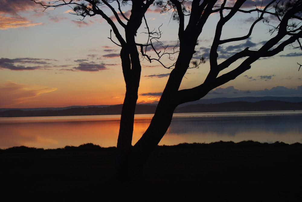 silhouette photography of tree near body of water