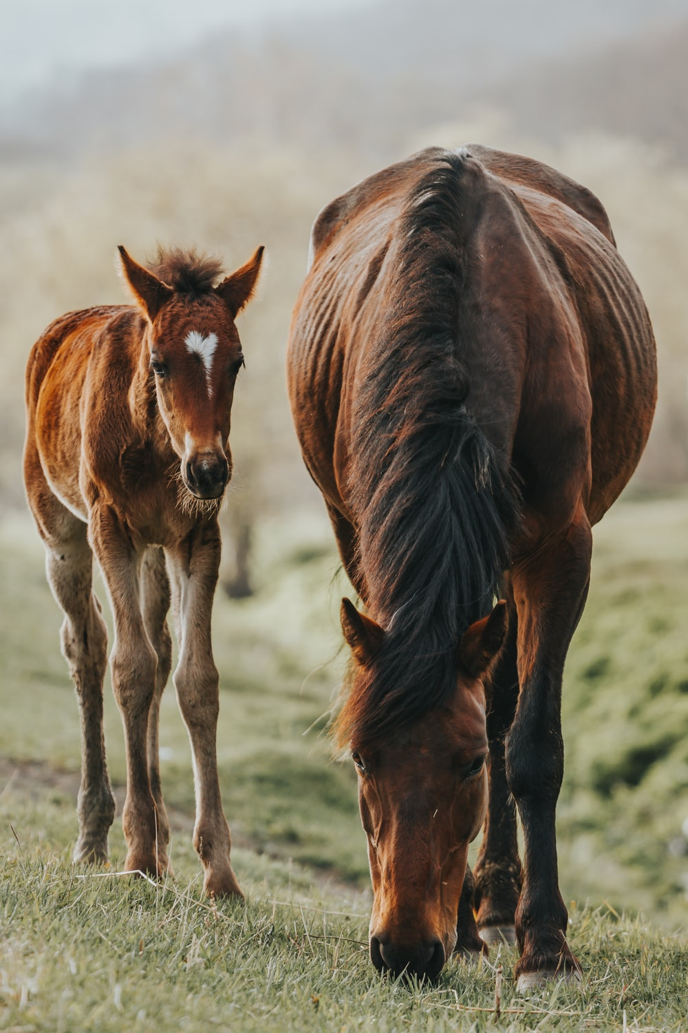 brown horse with cub