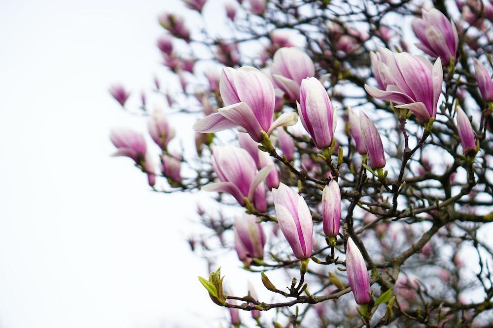 pink petald flowers