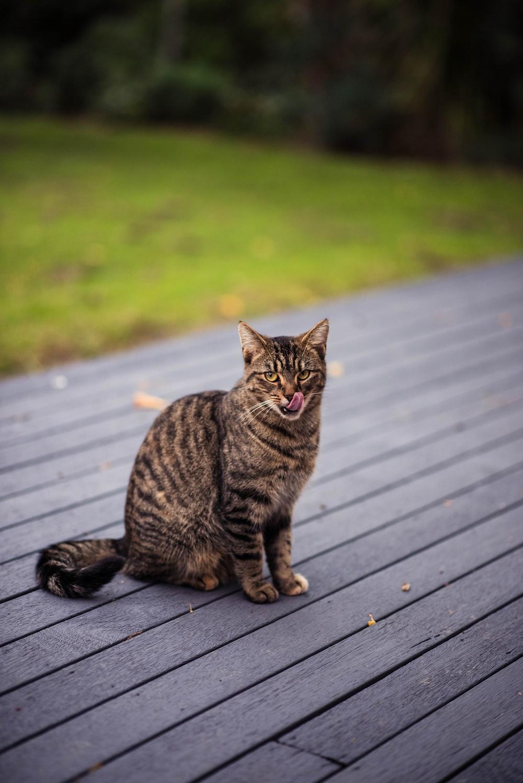 brown tabby cat on grey wooden board