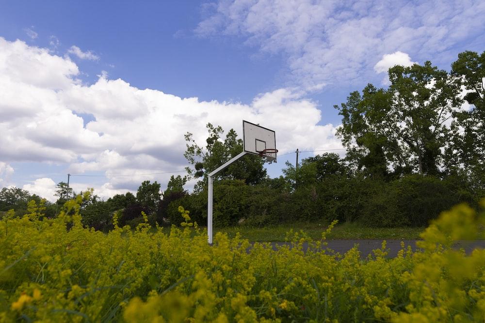 basketball court near trees