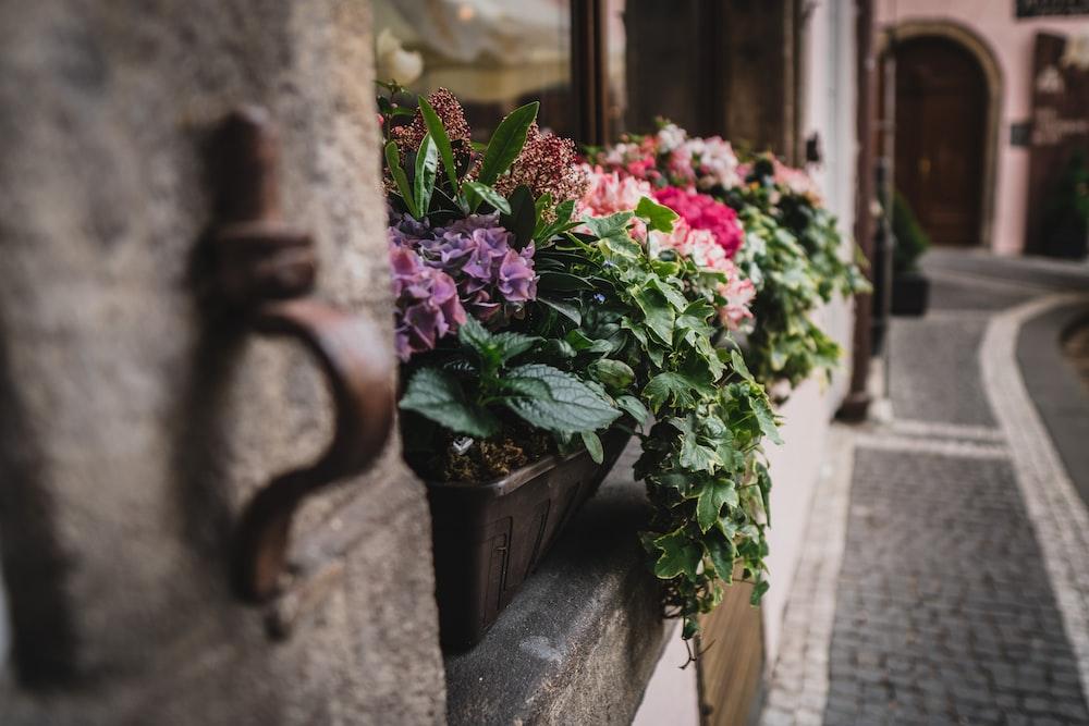 flowers in pot near window