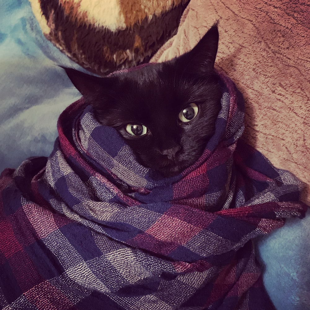 black cat wrapped in maroon and grey plaid textile