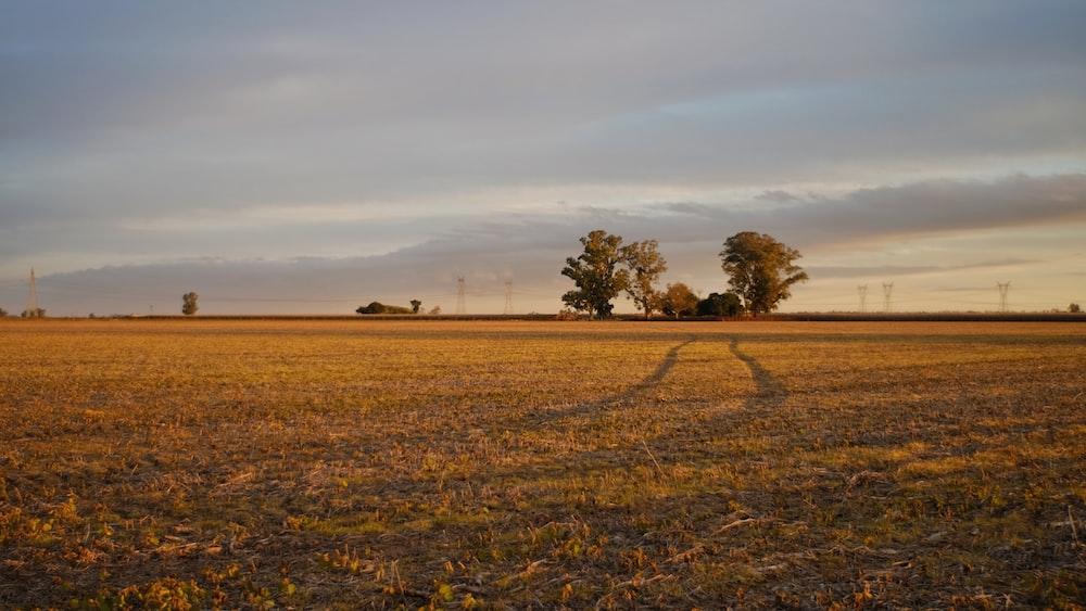 view of grass field