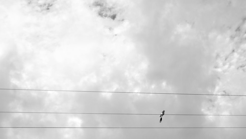 black and white bird on electric cable under white and gray skies