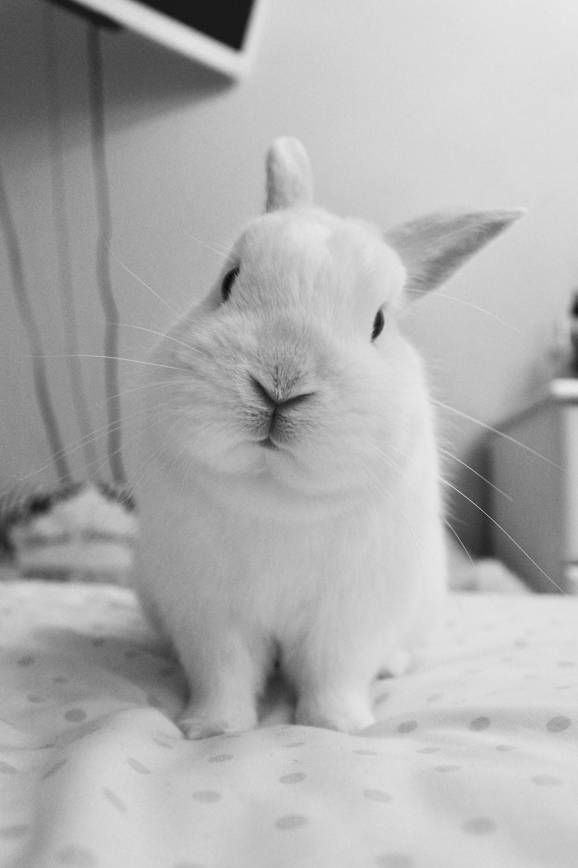 rabbit on polka-dot fabric