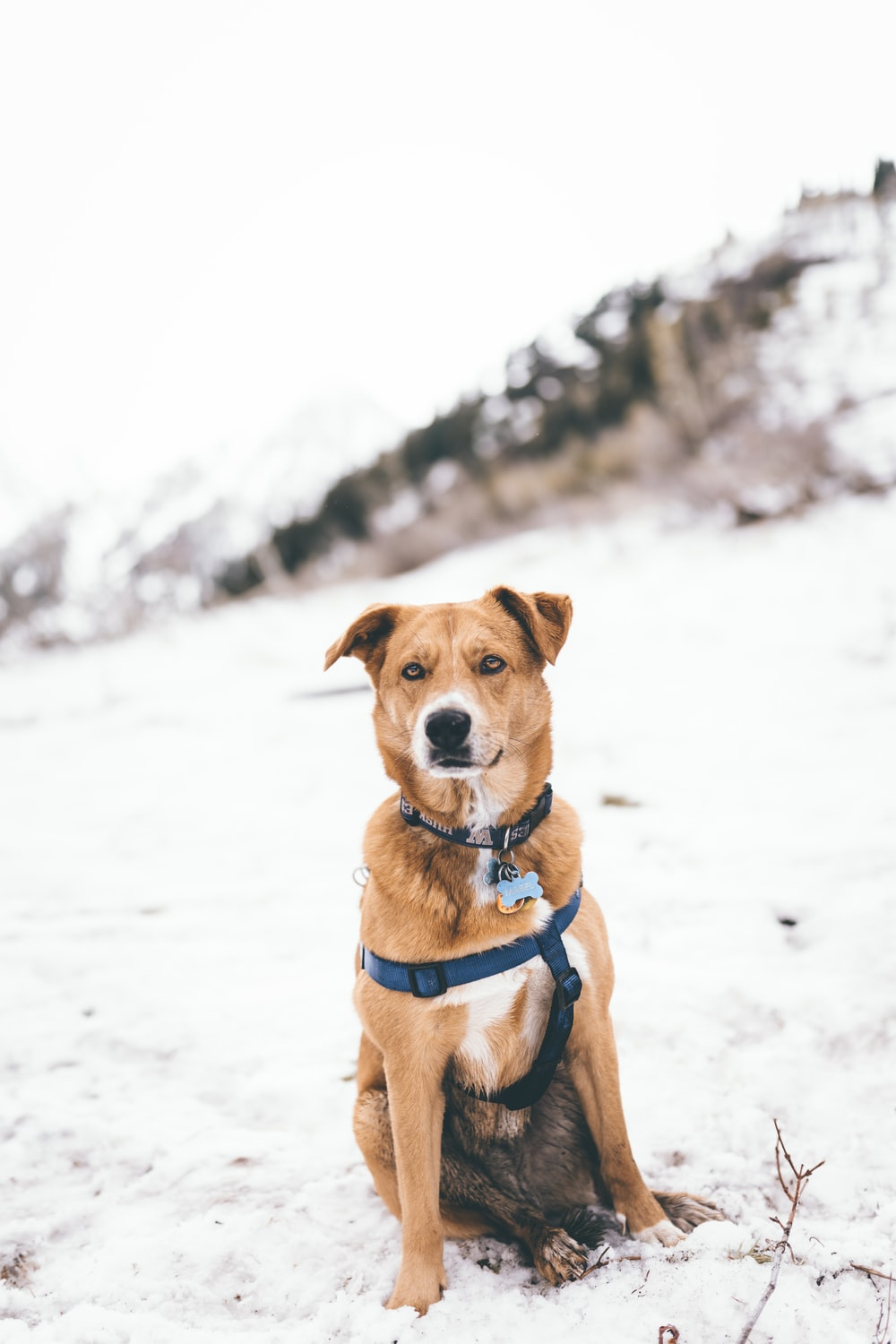 short-coated brown and white dog on snowy field