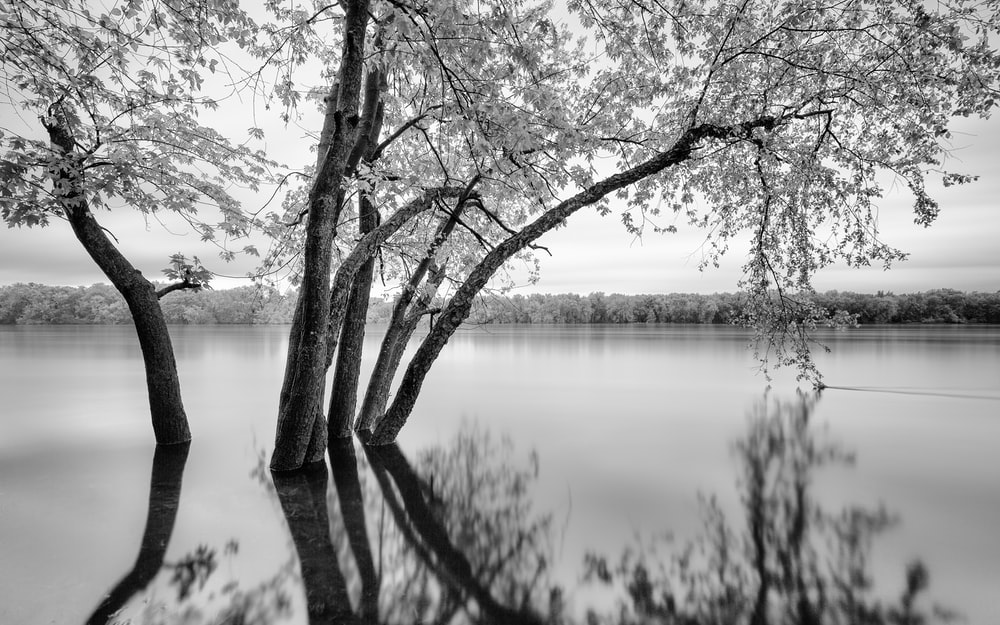 grayscale photography of tree surrounded by water
