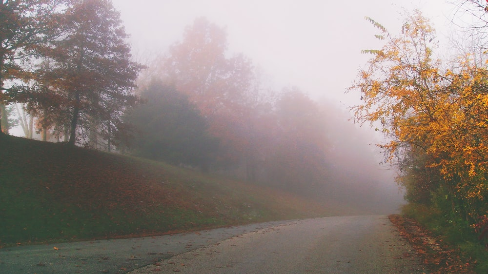 gray concrete road surrounded with trees on foggy times