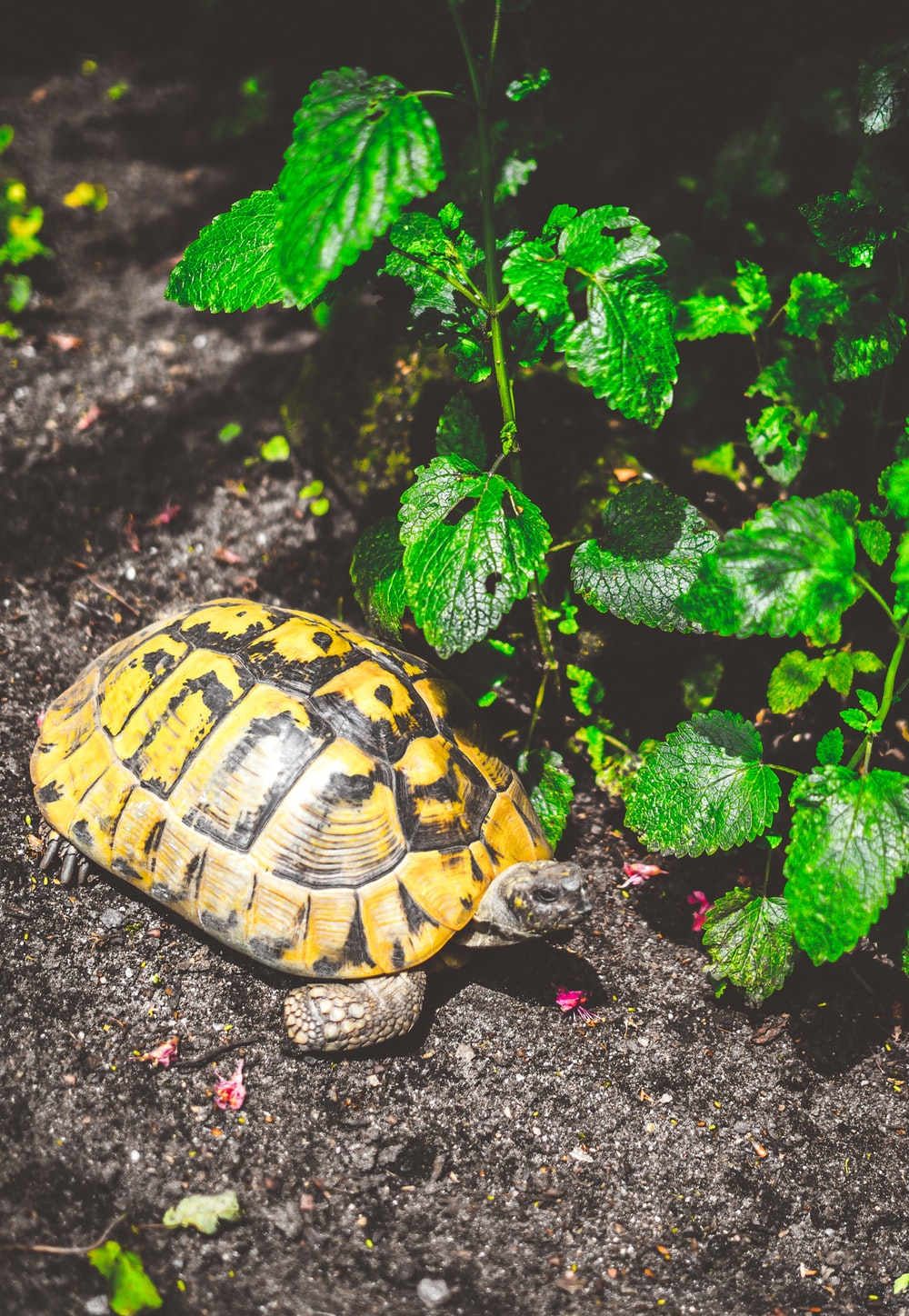 turtle beside the plant photography