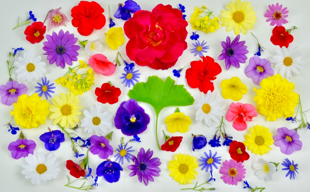 assorted multicolored flowers lot