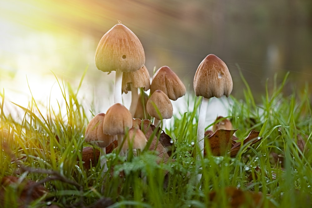 brown and white mushroom close-up photography