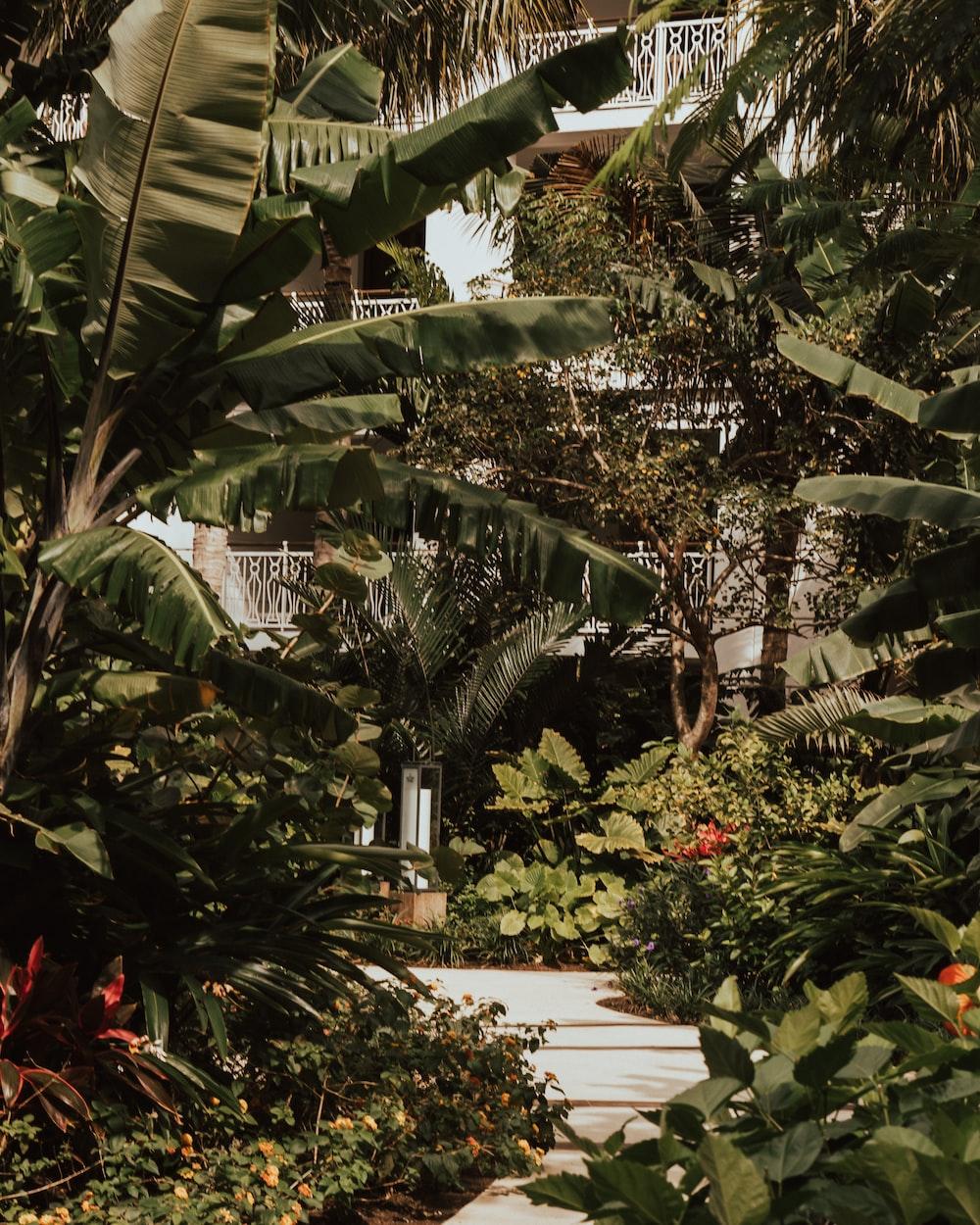 low angle photo of banana plants