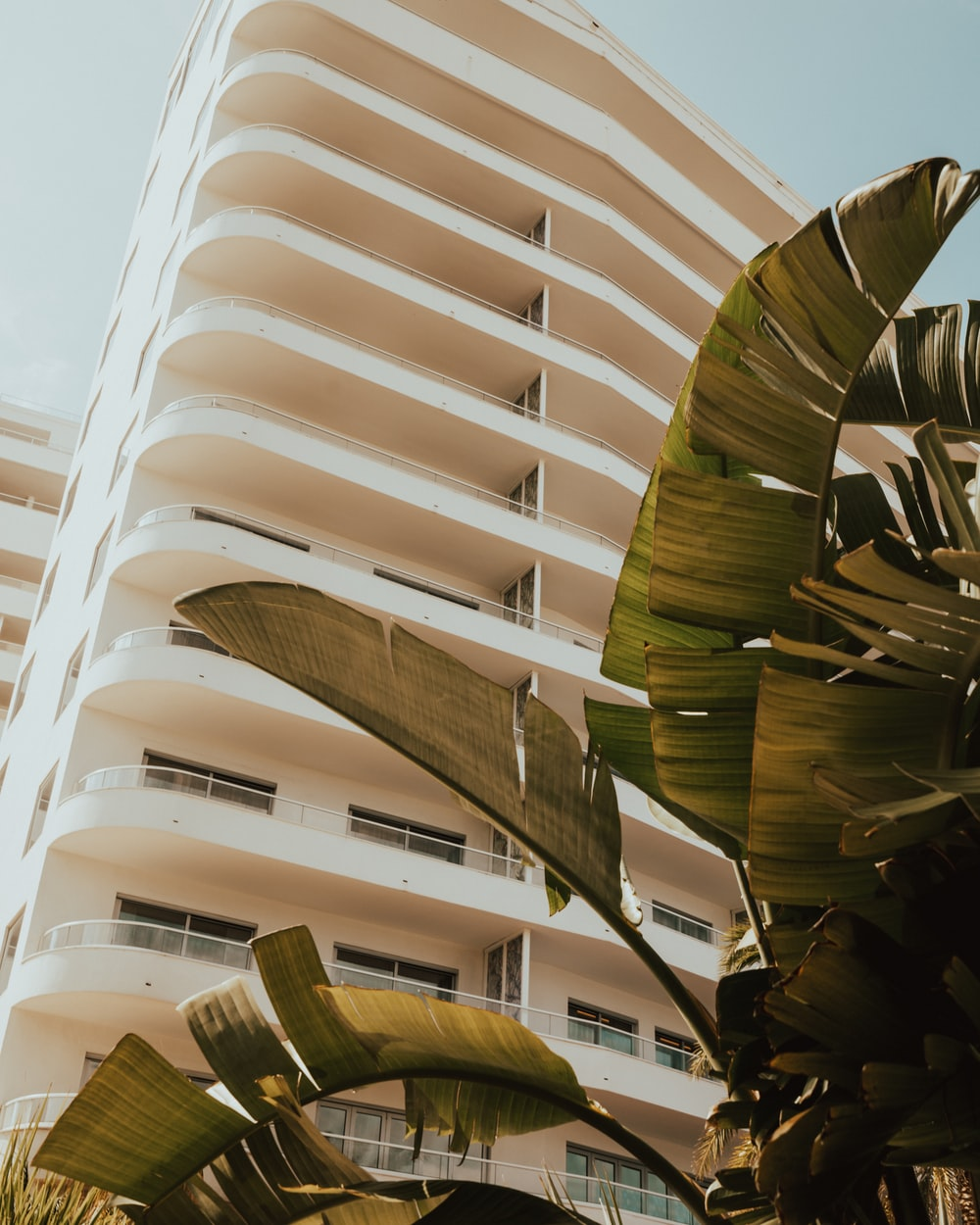 green traveler palm tree in front of white high rise tenement building