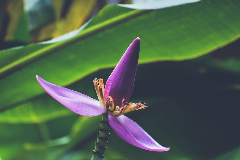 violet petaled flower