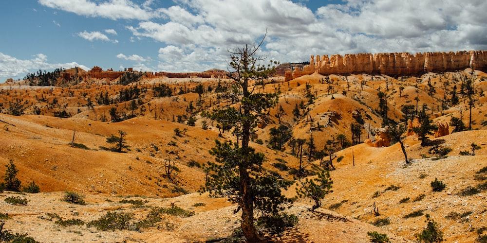 green pine tree in desert scenery