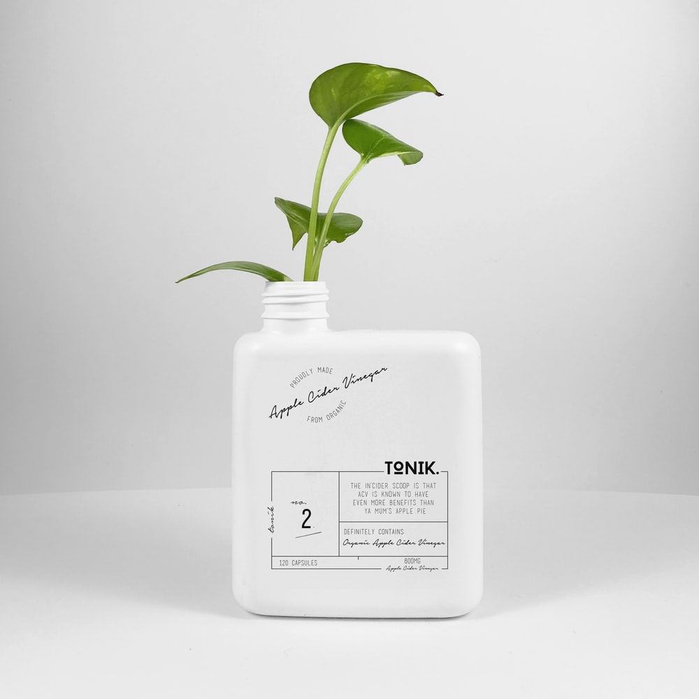 green plant in a white plastic container