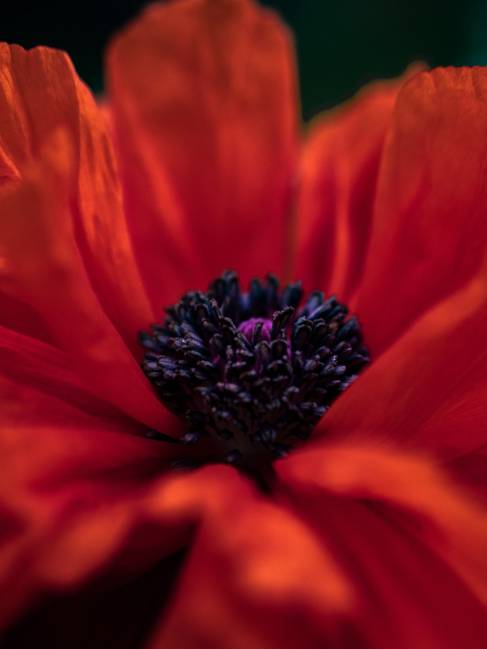 orange-petaled flower
