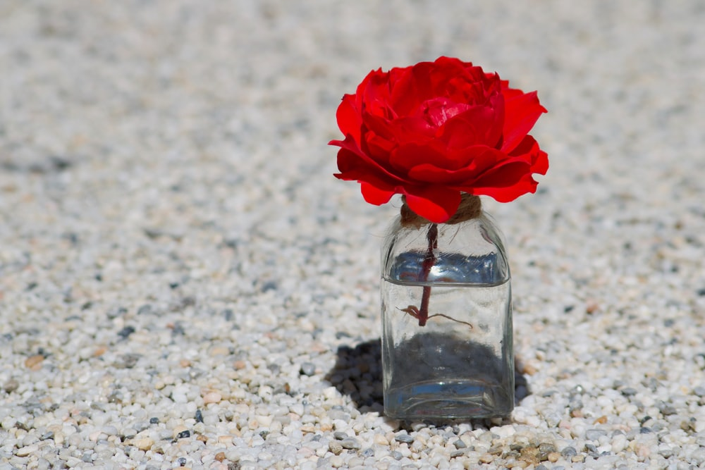 red flower in clear glass jar