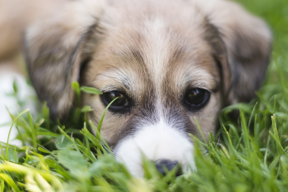 selective focus photo of dog on green grass field