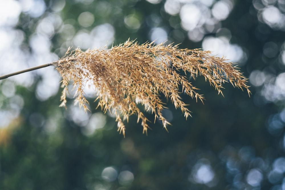 beige plant