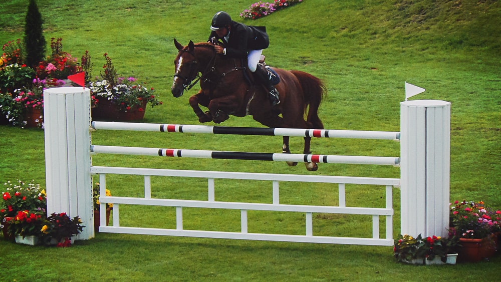 horse jumping over white fence during daytime