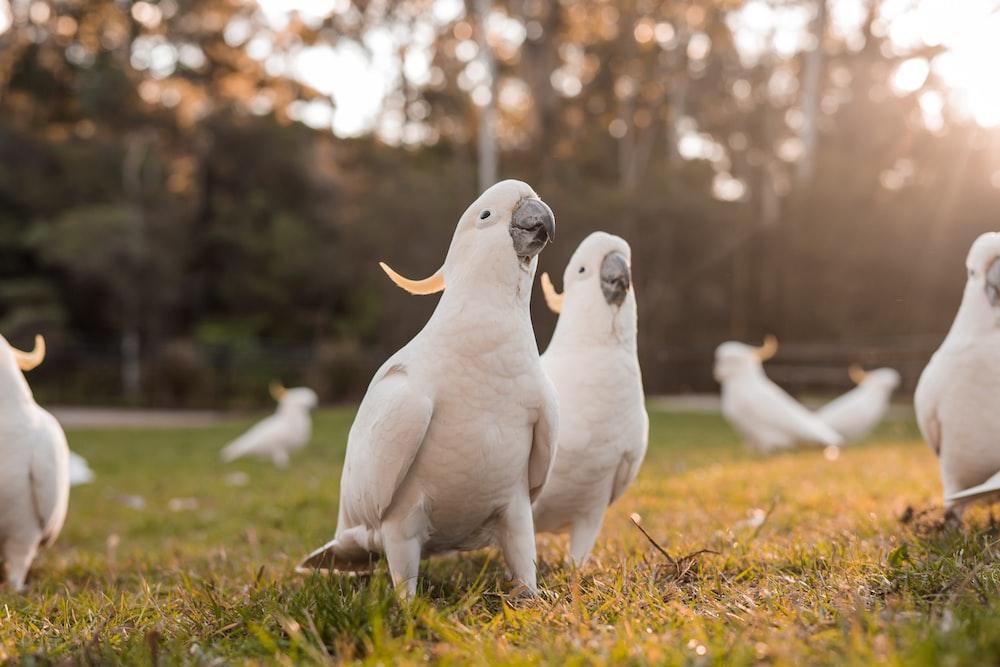 parrots on grass field