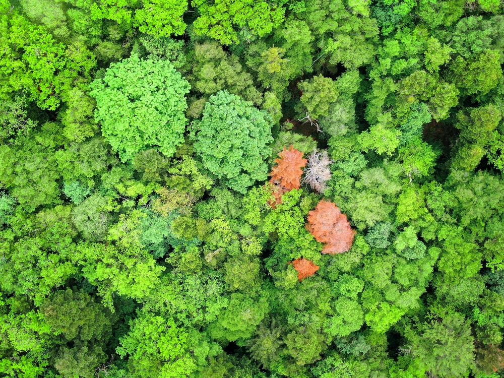 aerial photography of orange and green leafed trees