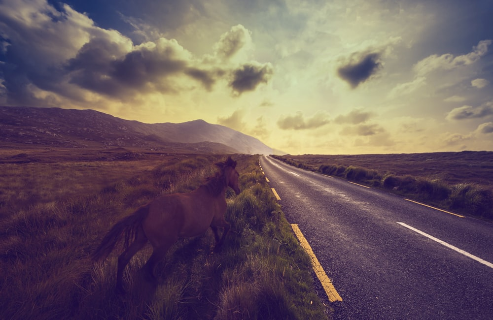 horse standing near empty road