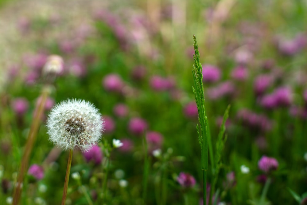 pink and white petaled flower plants